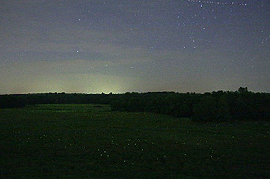 fireflies in missouri
