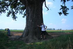 katy trail missouri mcbaine missouri champion bur oak