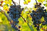 katy trail missouri wine country