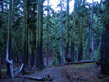 oregon forest south sister hike