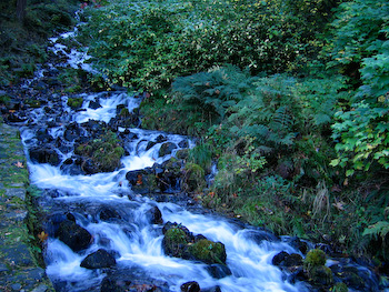 stream rapids oregon